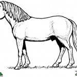 Horses coloringpages -