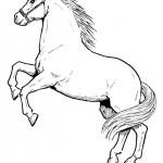 Horses coloringpages -